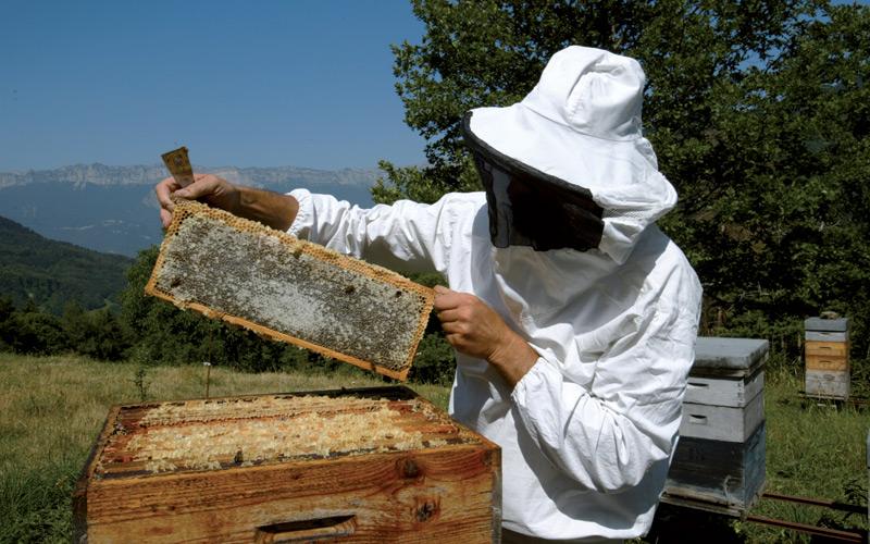 Des-abeilles-et-des-hommes2