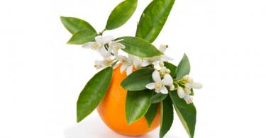 Eau-de-fleur-oranger