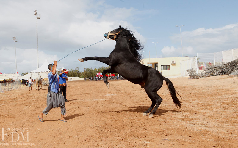 Des shows couper le souffle au salon du cheval photos for Salon du cheval montpellier 2017